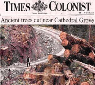 Cathedral Grove Trees Cut